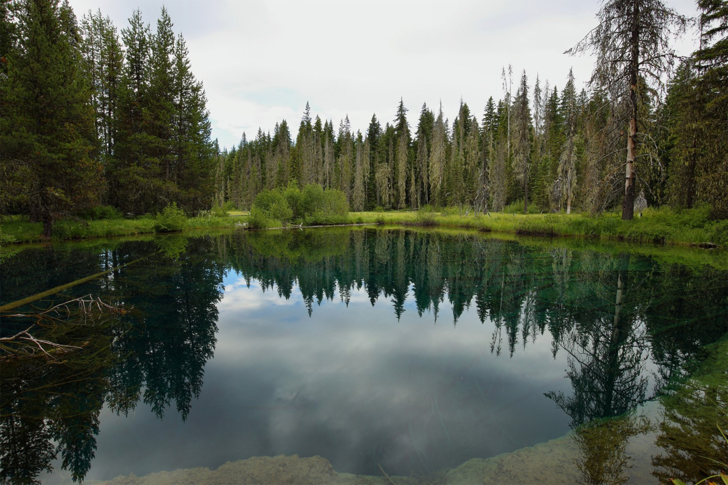 Clear Focus on Environmental Stewardship and Forestry Management | Marc For Oregon Governor